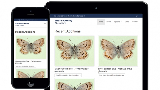 British Butterfly Aberrations